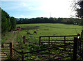 TQ4562 : Countryside east of North Cudham Lane BR6 by Philip Talmage