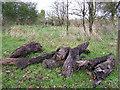 H4968 : Preserved bog wood at Camowen by Kenneth  Allen