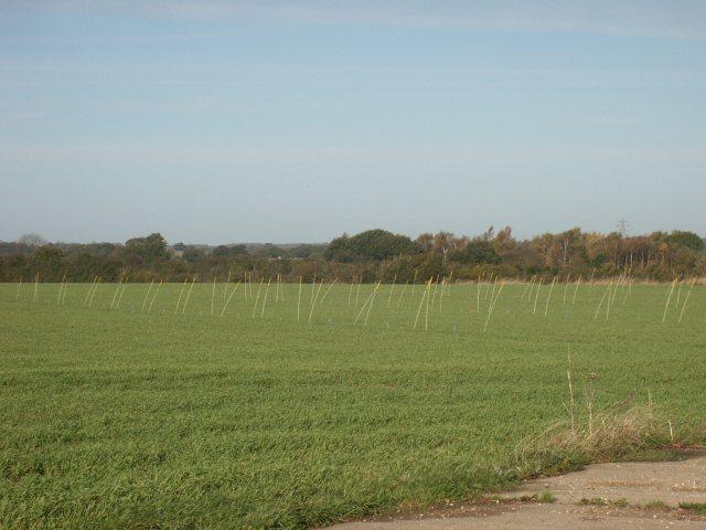 Marker poles (?), near Bawburgh