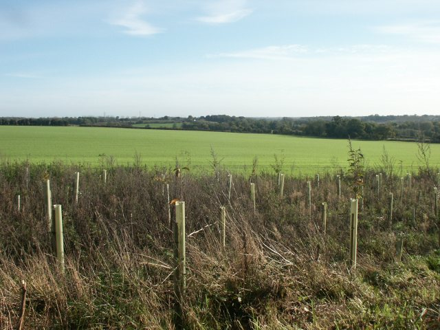 New trees, fields, Marlingford