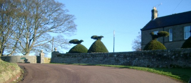 Topiary at Cartington