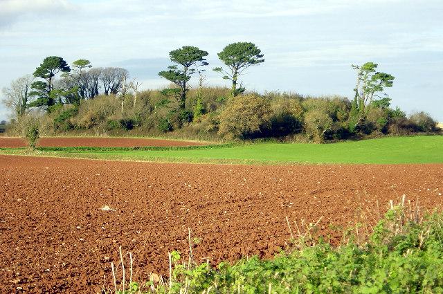 Waddeton Lane Plantation