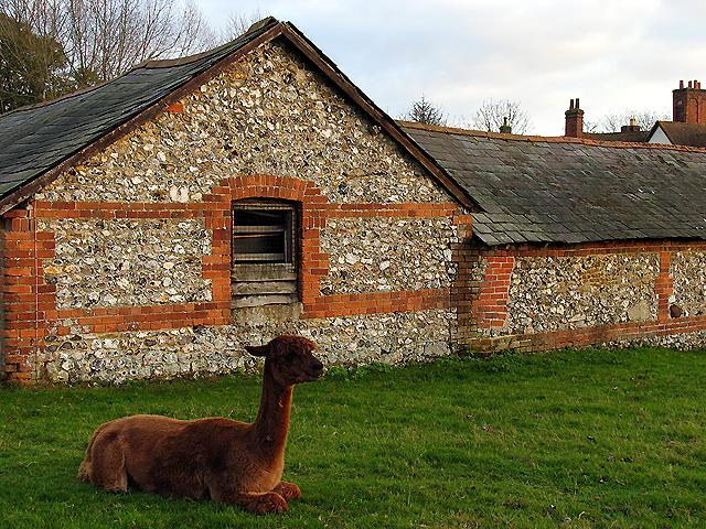 Manor Farm: Calleva near Silchester