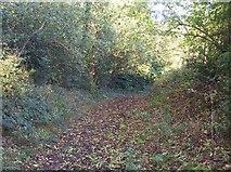 SO8252 : Ham Lane, Powick by Bob Embleton