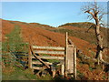 NY1423 : Stile Drove Road Sourfoot Fell by Michael Graham
