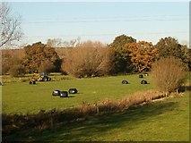 ST4636 : Small Moor, Walton by Patrick Mackie