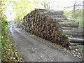 SU4558 : Wood pile by Nygel Gardner