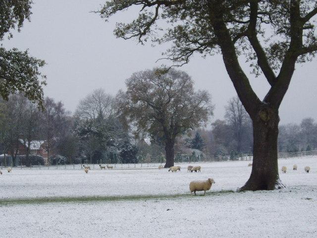 Astle Park in winter
