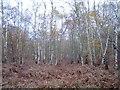 TQ0791 : Rickmansworth: Bishop's Wood Country Park by Nigel Cox