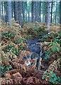 SK5961 : WW1 trench, Sherwood Pines by Lynne Kirton