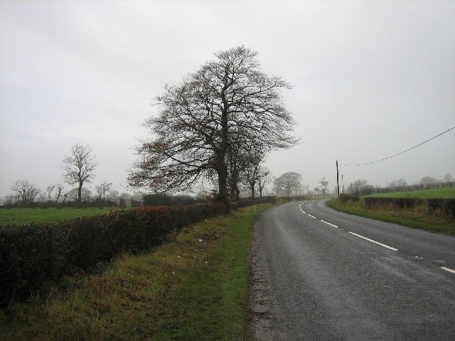 Tree beside a bend in the road.