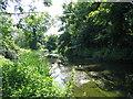 TQ1372 : River Crane, Crane Park by John Goodall