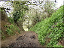 TQ0147 : Cutting on track near Manor Farm, Guildford by Humphrey Bolton