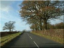 SP4111 : Cuckoo Lane by Colin Bates