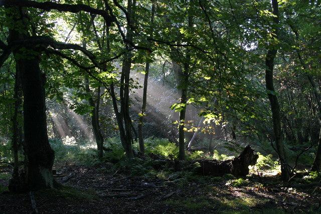 Gosforth Park Nature Reserve