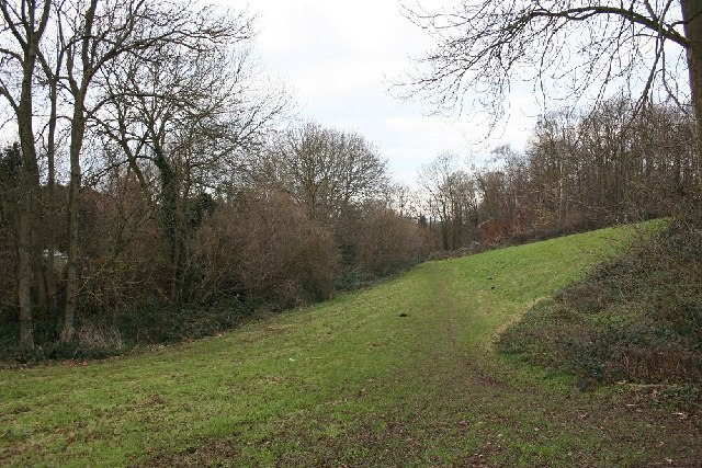 Woodland within urban area, Maidstone