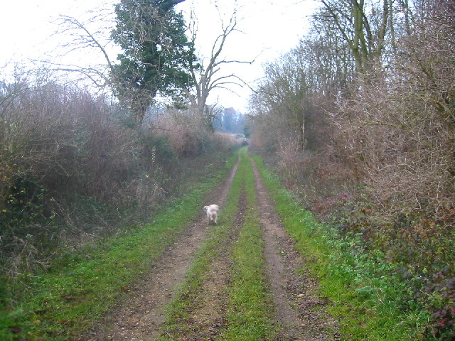Bridleway between Clothall and Baldock