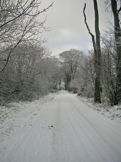 Road to Whitestripes Farm