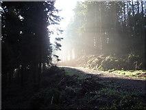 SS6710 : Flashdown Plantation by Dave D