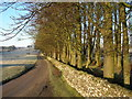 NY7005 : Stand of trees, High Lane, Newbiggin-on-Lune by John H Darch