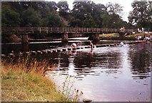 SE0754 : Bolton Abbey Stepping Stones & Bridge by Jim Goldsmith