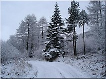 SJ1661 : Moel Famau slopes by Dot Potter