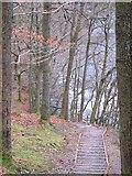 NY2824 : Woodland footpath to Keswick near river Greta by Tim Leete