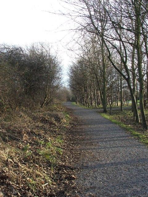 Tree Lined Footpath