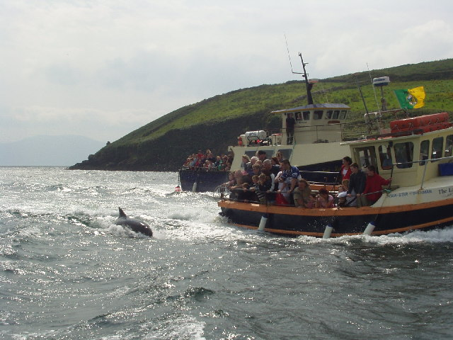 Entrance to Dingle Harbour, with Funghi the Dolphin