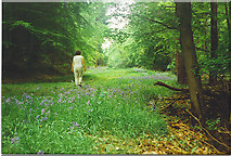 TQ0950 : Bluebells in Mountain Wood by Colin Smith