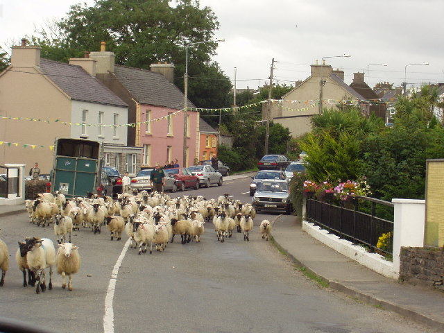 Sheep at Anascaul bridge