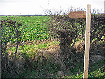 SE9647 : SW of Lund by Stephen Horncastle