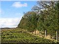 NY9888 : Catcherside North Plantation by Les Hull