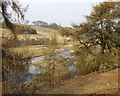 NT9700 : River Coquet looking towards West Hepple by Kenneth   Ross