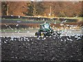 NZ3174 : Winter Ploughing by Christine Westerback