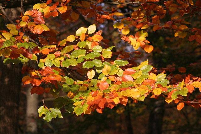 Autumn Colours - Forest of Dean