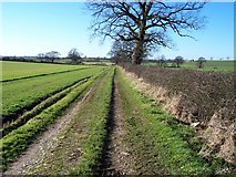 NY2950 : Footpath to Micklethwaite. by John Holmes