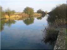 SP4508 : River Thames: Downstream of Swinford Bridge by Nigel Cox