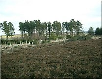 NZ7813 : Newton Mulgrave Woods on Newton Mulgrave Moor by Gordon Brown