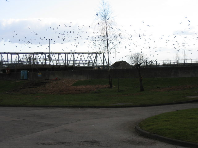 Cirencester Sewage Works, near South Cerney