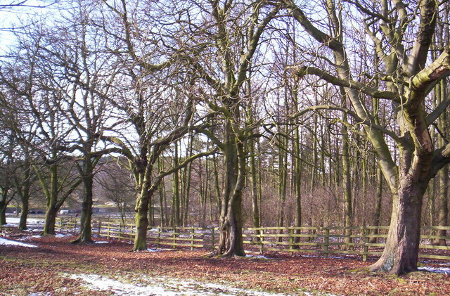 Knowsley Park