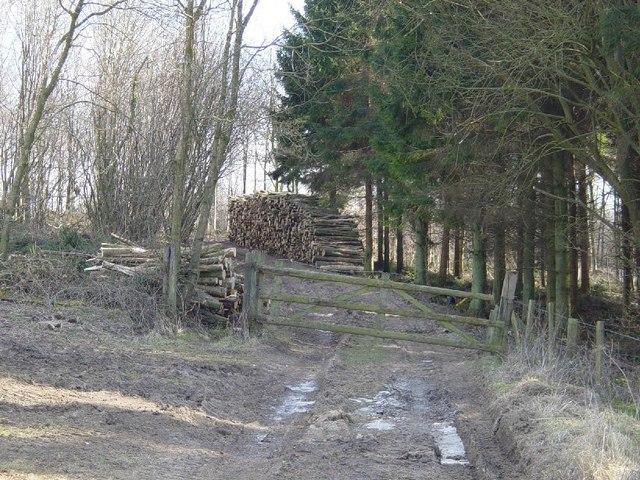 Charlton Forest
