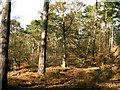 SJ3919 : Woodland by Keith Havercroft