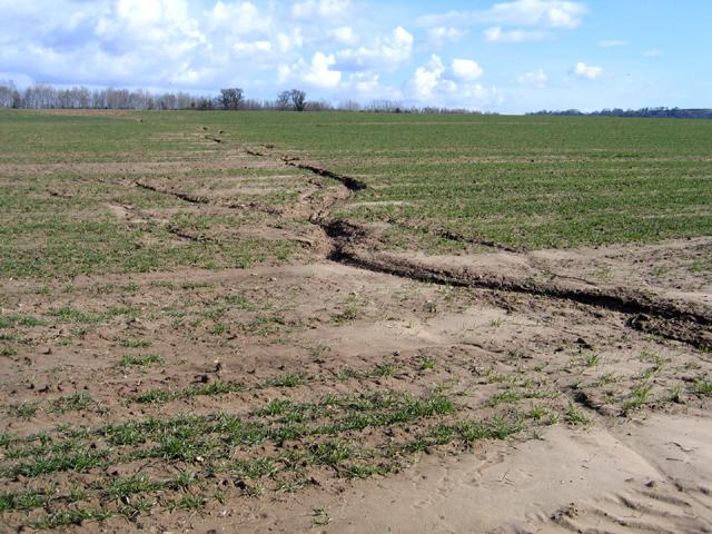 Soil erosion, Wigborough, Somerset