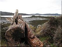NM6586 : Arisaig Bay by Lisa Jarvis