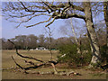 SU2912 : Bartley cricket field from the wood's edge, New Forest by Jim Champion