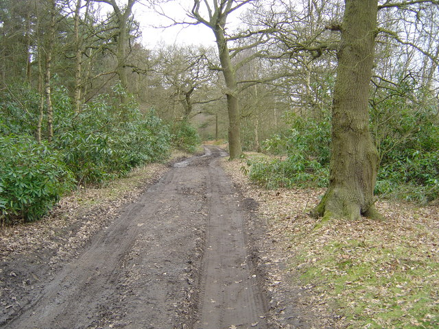 Bridle path at Houghton Moor
