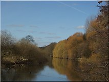 SE2536 : River Aire near Kirkstall Abbey by Rich Tea