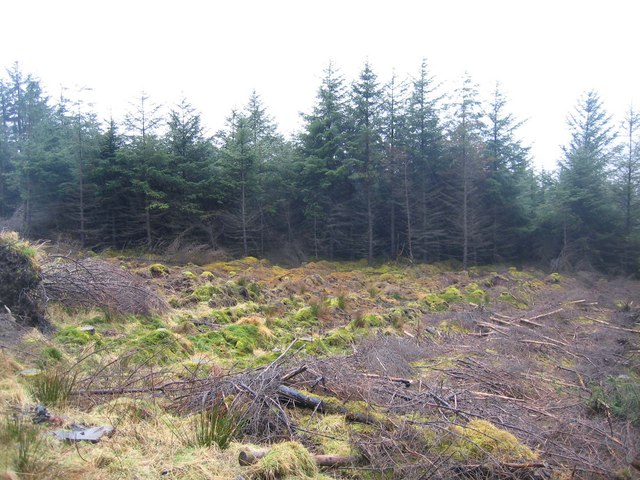 Forest clearing above Grula