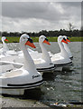 SP9634 : Woburn's Swans by Martin Addison